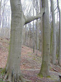 Göttingen Forest mountain range in Lower Saxony, Germany