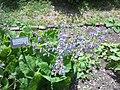 Giardino botanico di Brera (Milan 19.jpg