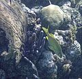 Glover's Reef 2-14 (32989755441).jpg
