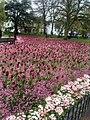 Gorsedd Gardens, Cardiff, April 2018 (1).jpg