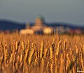 Grain (52305962).jpeg