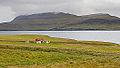 Granja en la península de Akranes, Vesturland, Islandia, 2014-08-15, DD 102.JPG