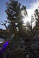 Great Basin 03.jpg
