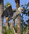 Great Blue Heron - Flickr - Andrea Westmoreland.jpg