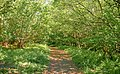 Green path spring.jpg