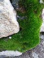 Green rock.jpg