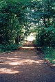 Groveash Lane - geograph.org.uk - 53654.jpg
