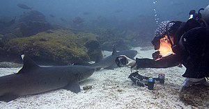 Scuba diving - Diver taking photos of a shark