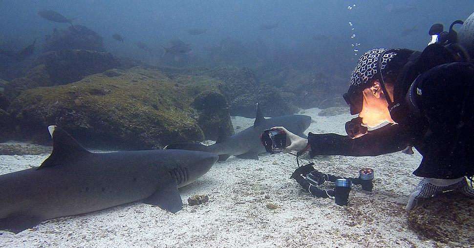 Gustavo Gerdel Fotografiando Tiburones