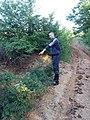 Här är det en stor skattgrop i skogen ovanför Cekmin. Några nattliga skatteletare har letat efter en skatt. Frågan var ifall de hittade en skatt eller inte. För den som vill gräva vidare, så finns positionen fö - panoramio.jpg