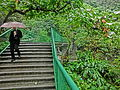 HK 北角 North Point 香花徑 Aroma Walk rain 25 outside stairs n visitors Dec-2013.JPG