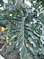 HK 駿發花園 Prosperous Garden green leave plant 2.jpg