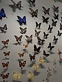 HK TST 尖沙咀 Tsim Sha Tsui 加連威老道 Granville Road HKSM Science Museum 昆蟲 insecta samples September 2021 SS2 01.jpg