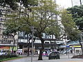 HK TST Urban Council Centenary Garden tree view Chatham Road South.JPG