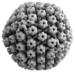 Viruses - Photo (c) Thomas Splettstoesser, some rights reserved (CC BY-SA)