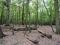 Hambach forest 06.jpg