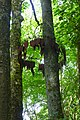 Hanging Fire, a sculpture in the Forest of Dean.jpg