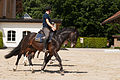 Haras national Avenches - 4.jpg