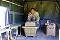 Hawaii National Guard (43918345884).jpg