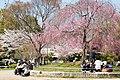 Heian Shrine 2009-04-07 (3484405969).jpg