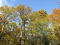 Herbst im Hardtwald - panoramio (1).jpg