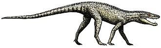 Crocodylomorpha - Image: Hesperosuchus flipped