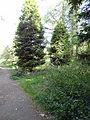 High Elms arboretum.jpg