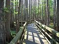 Highland Hammocks SP Swamp Trail04.jpg