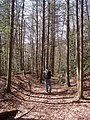 Hiking in the Jefferson National Forest - panoramio.jpg