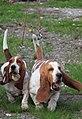 HiperParada animalelor la CORA (4548471665).jpg