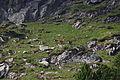 Hirsche fürstkar 0913 13-07-13.JPG