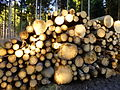 Holzstapel im Wald--.JPG