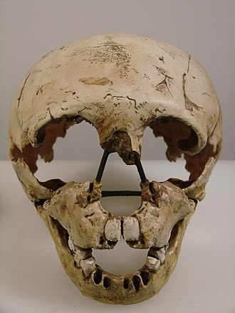 Gibraltar 2 - Image: Homo neanderthalensis face (University of Zurich)