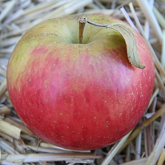 Apple - Fruit