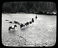 Horses and mules crossing flooded Skagit River, 1932 (35525313703).jpg