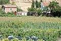 Huerta seguntina - panoramio.jpg