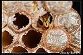 Hymenoptera (6022583198).jpg