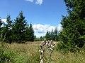 Idarwald - bei Stipshausen - panoramio.jpg