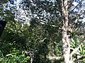 Iguape - SP - panoramio (250).jpg