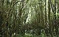 Ilha das Flores P5270240 (35839645532).jpg
