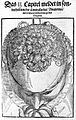 Illustration of crown of head, 16th century. Wellcome L0007198.jpg
