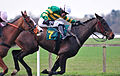 Im The Decider ~ Riden By A P McCoy (3310060198).jpg