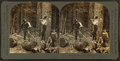 In the lumber region of Oregon, U.S.A, by Keystone View Company.png