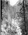 Index Galena Co railroad tracks next to Trout Creek, ca 1925 (PICKETT 306).jpg