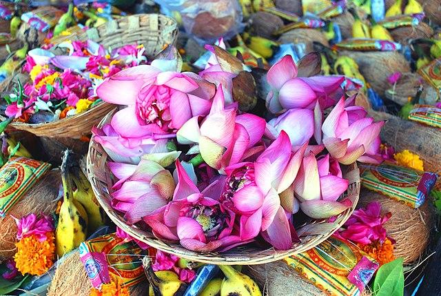 fileindian lotus flowers  wikimedia commons, Beautiful flower