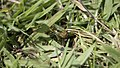Insect Moving with Waste from an animal 2.jpg
