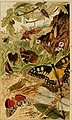 Insects at home; being a popular account of insects, their structure, habits and transformations (1872) (14777651695).jpg