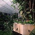 Inside the Barbican Centre Conservatory.jpg