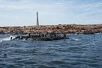 Isla de Lobos (Uruguay).jpg