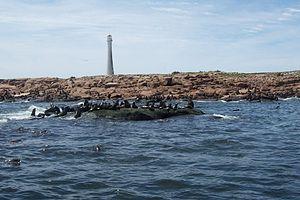 Isla de Lobos - Image: Isla de Lobos (Uruguay)